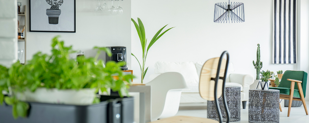 Going green with trendy indoor plants