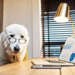 Cute white dog in eyeglasses working on a laptop at the office